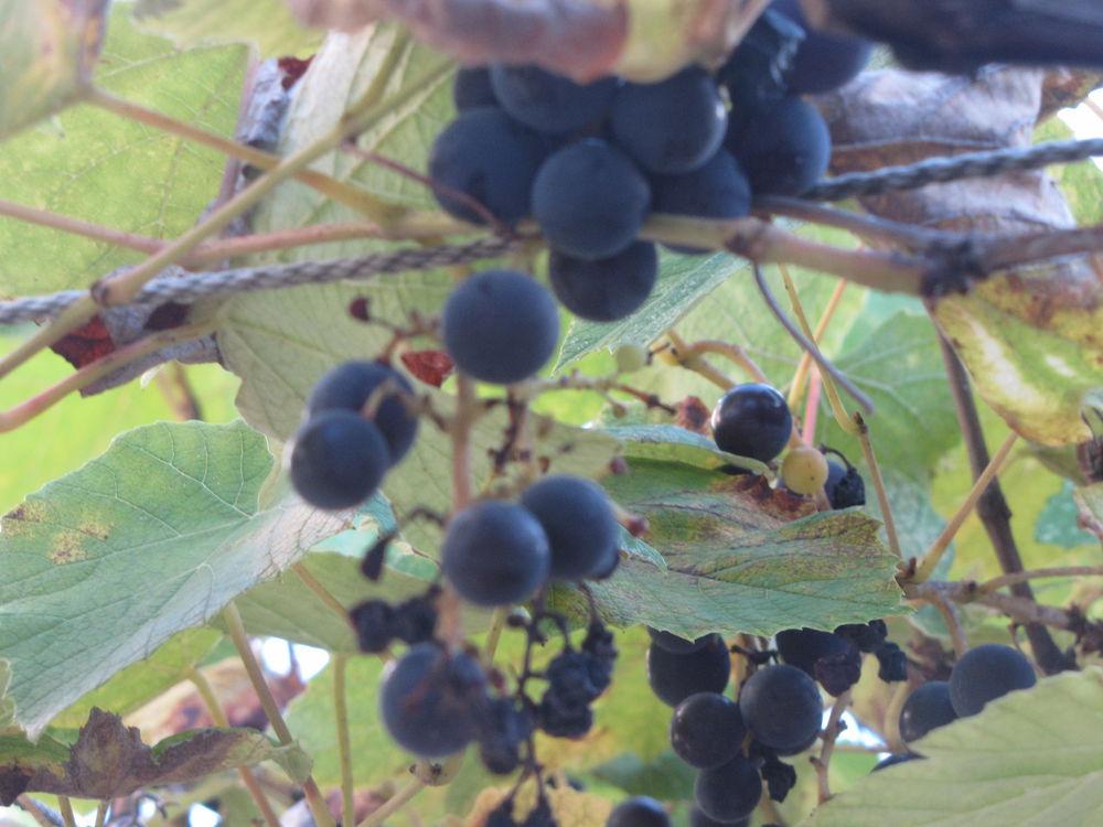 В погоню за летом или бархатный сезон (часть 2), фото № 34