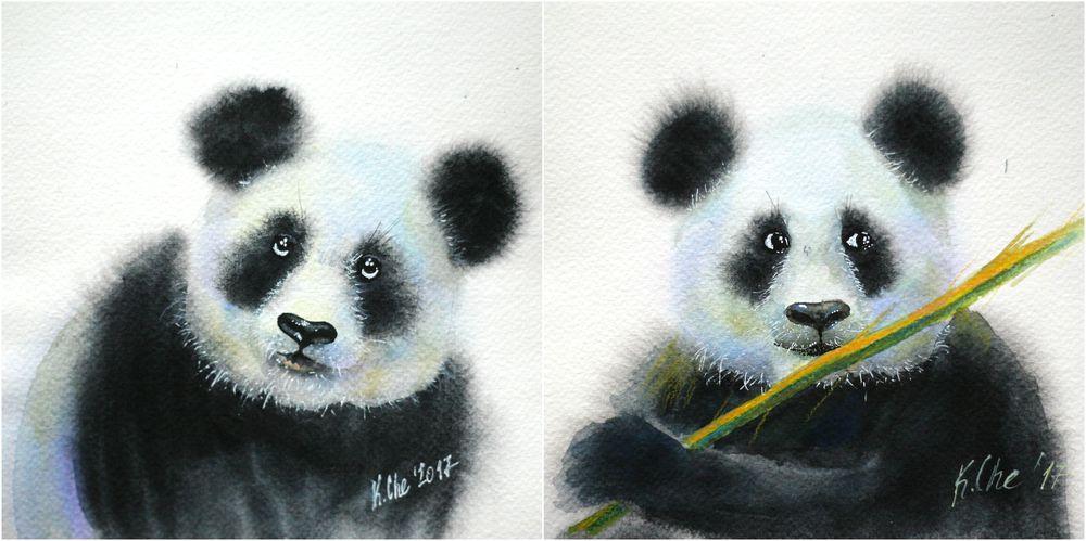 панда, панды, акварель, серия акварелей