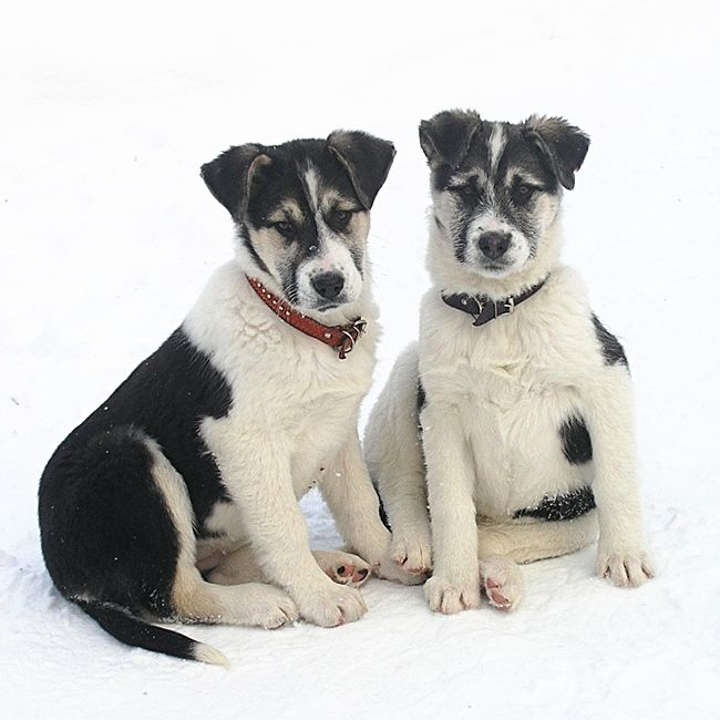 собака в дар, щенок ищет хозяина