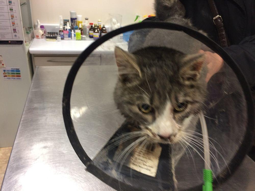 помощь животным, котик, благотворительный аукцион, аукцион, аукцион в помощь, срочная помощь