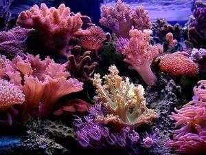Спасти кораллы и себя. Ярмарка Мастеров - ручная работа, handmade.