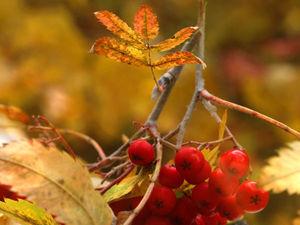 Настроение: Осень) шуршим листьями и отправляемся в поход за вдохновением)). Ярмарка Мастеров - ручная работа, handmade.