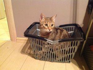 Розыгрыш подарков ко дню кошек) | Ярмарка Мастеров - ручная работа, handmade