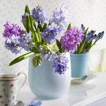 spring-flowers-new-ideas-hyacinths1.jpg