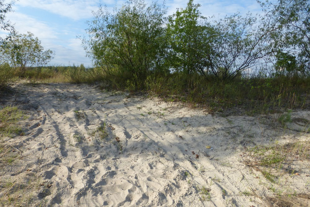 белый песок полесья, отдых за два дня