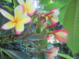 Лето в ботаническом саду, Окинава, Япония. Ярмарка Мастеров - ручная работа, handmade.