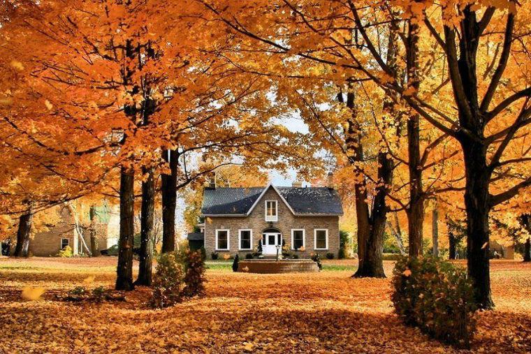 Учимся рисовать! Пишем акварелью картину «Осенняя зарисовка», фото № 1