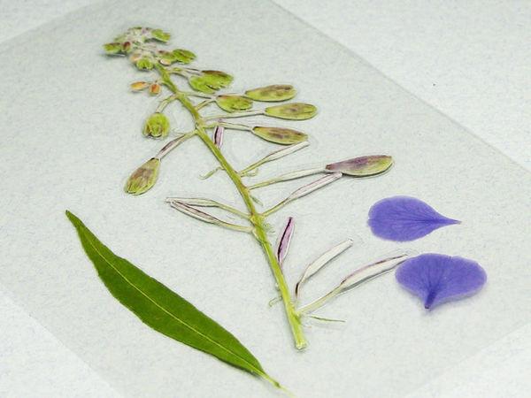 Как просто заламинировать гербарий? | Ярмарка Мастеров - ручная работа, handmade