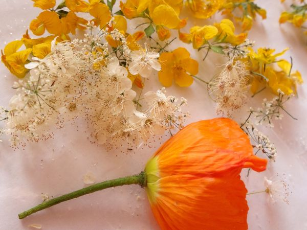Сухоцветы в ювелирной эпоксидной смоле: убираем с пути несколько увесистых граблей   Ярмарка Мастеров - ручная работа, handmade