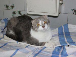 ...королева ждёт любви. История кошки Филадельфии   Ярмарка Мастеров - ручная работа, handmade