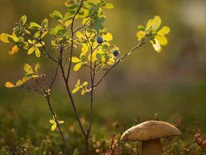 Расцвел цветок, который вы посадили — счастье. Ярмарка Мастеров - ручная работа, handmade.