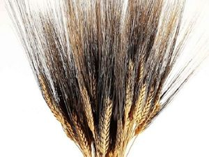Пшеница двухцветная (черная) в наличии!. Ярмарка Мастеров - ручная работа, handmade.
