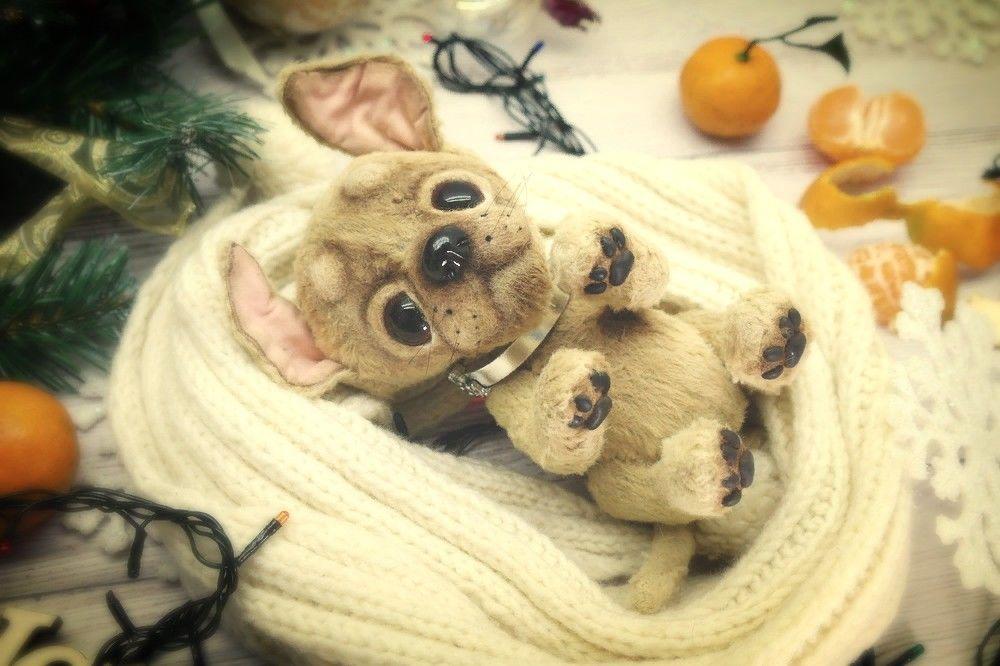 розыгрыш, просто так, собачка, тедди, собака в подарок