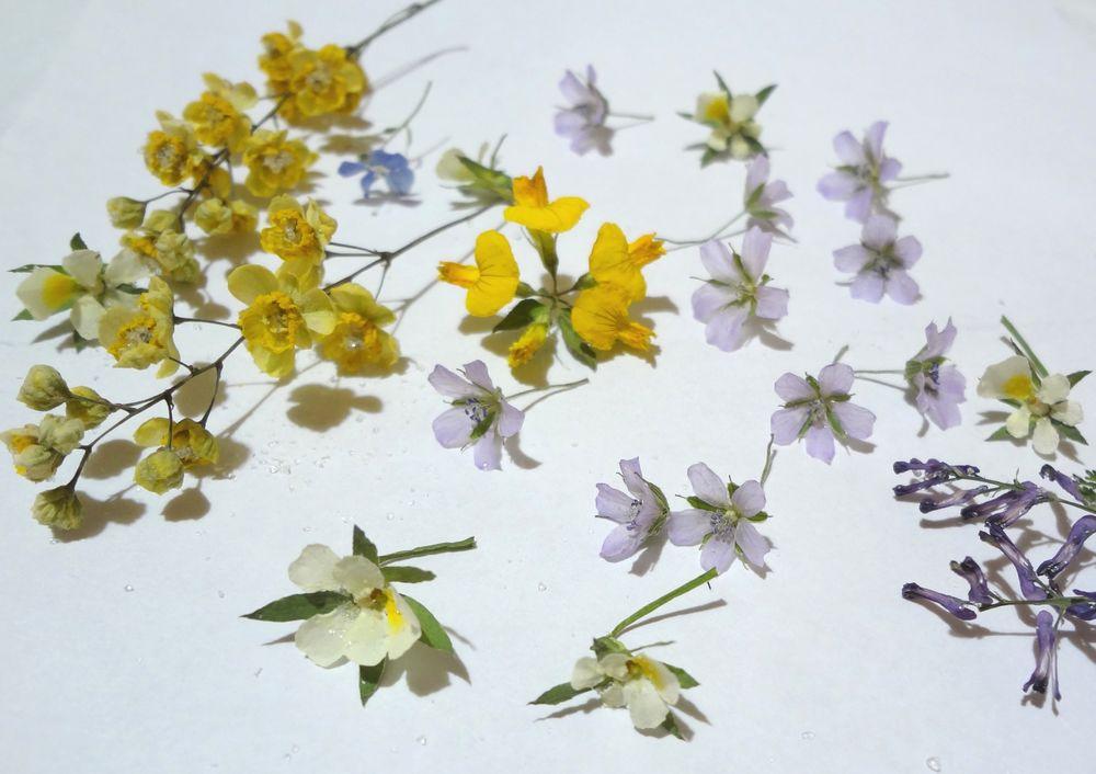 цветы в смоле