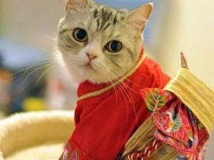 Ми-ми-ми по-японски | Ярмарка Мастеров - ручная работа, handmade