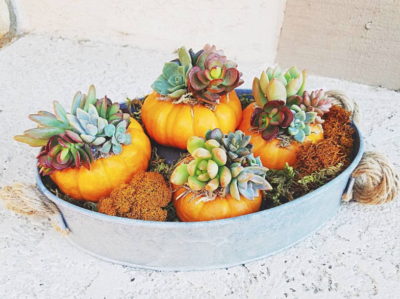 You'll Refuse to Carve Scary Pumpkins Seeing These Gorgeous Ideas with Succulents, фото № 1