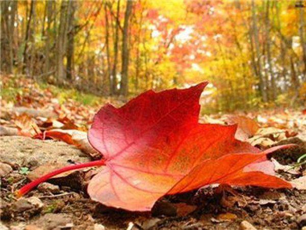 Здравствуй, осень! И новый сезон:)   Ярмарка Мастеров - ручная работа, handmade