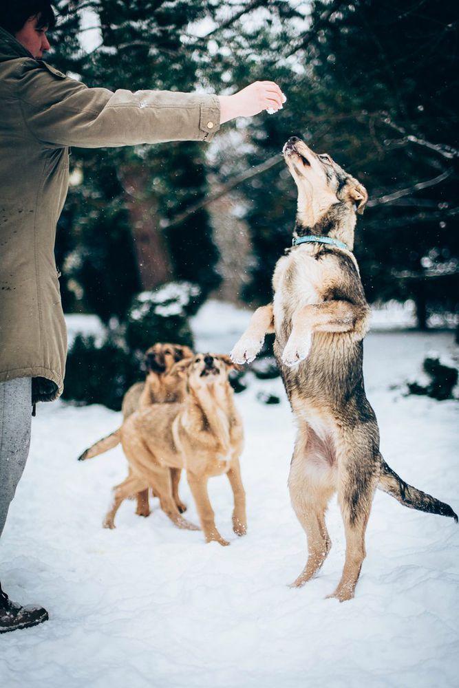 щенок в добрые руки, щенки бесплатно, двортерьер
