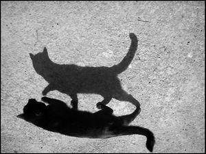 Выйди из тени! | Ярмарка Мастеров - ручная работа, handmade