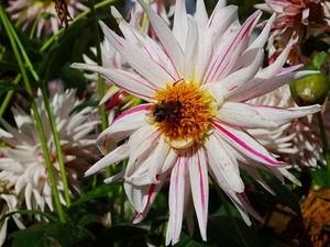 Дорожные записки. Руан, Ботанический сад. Ярмарка Мастеров - ручная работа, handmade.