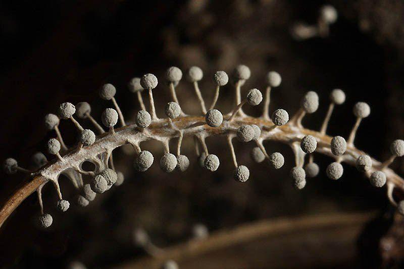 Картинки грибов плесени