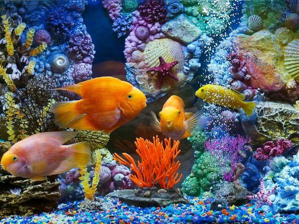 Обитатели морских глубин желают познакомиться! | Ярмарка Мастеров - ручная работа, handmade