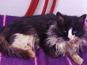 Прошу помощи для спасения бездомного котенка. Срочно требуется операция!. Ярмарка Мастеров - ручная работа, handmade.