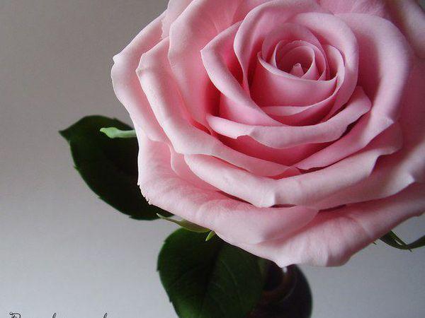 Керамическая флористика. Роза-королева цветов.   Ярмарка Мастеров - ручная работа, handmade