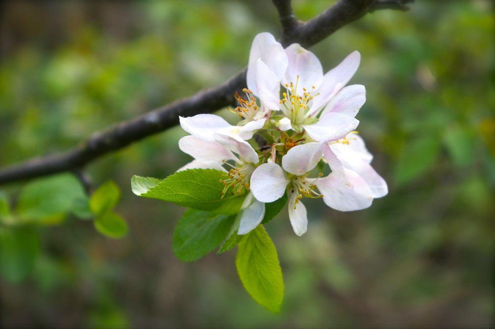 фото тани весны