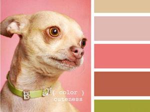 Черпаем вдохновение цветом в мире щеночков. Часть 4. Ярмарка Мастеров - ручная работа, handmade.
