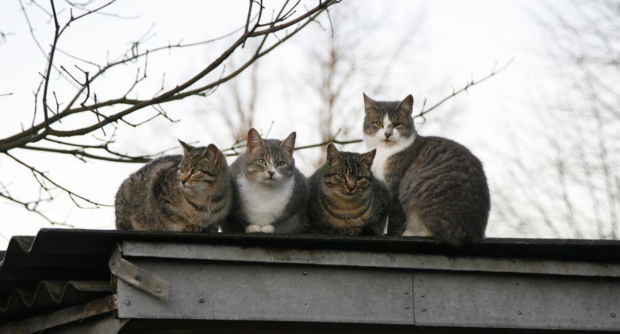 коты, кошки, бездомные животные, рассказы о животных, рассказы о кошках, котята, рассказы о котах, коты и кошки, люди и кошки