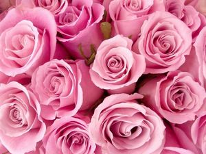 Аукцион розово-кораллового цвета. Ярмарка Мастеров - ручная работа, handmade.