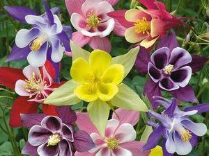 Mini коллекция - Только цветы!!! | Ярмарка Мастеров - ручная работа, handmade