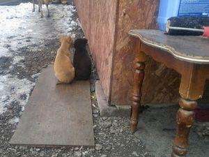 Четыре щеночка ищут дом!. Ярмарка Мастеров - ручная работа, handmade.