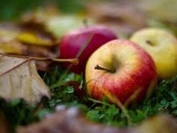 Осень пришла, ярмарку принесла! | Ярмарка Мастеров - ручная работа, handmade