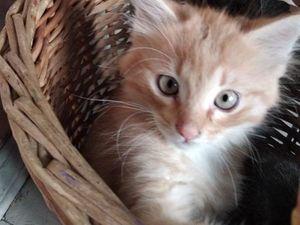Кто обещал ребёнку котёнка под ёлочку?. Ярмарка Мастеров - ручная работа, handmade.
