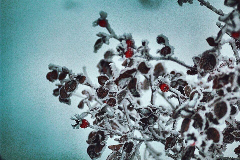 зима 2019, зимняя сказка