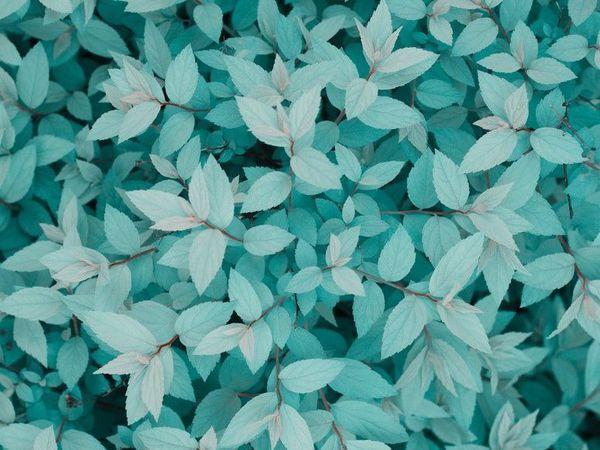 Каникулы с 27.09 по 10.10 | Ярмарка Мастеров - ручная работа, handmade