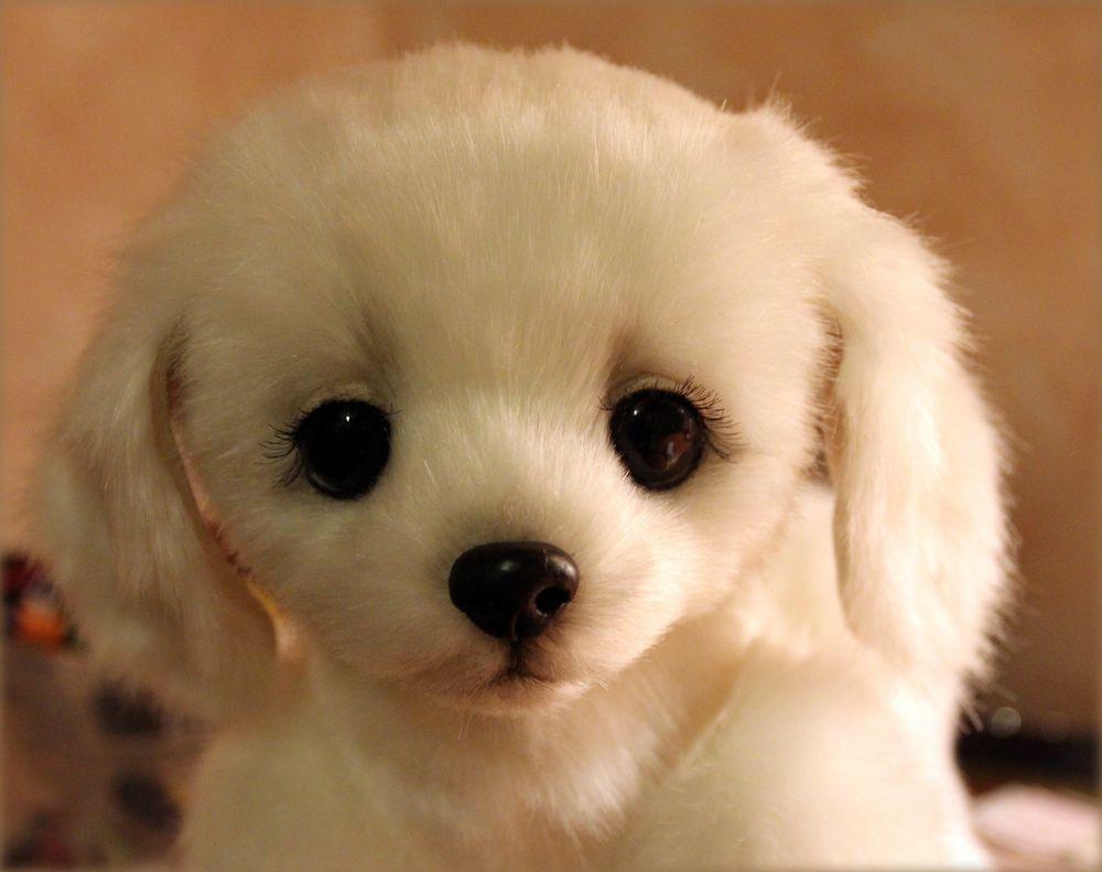 щенок, белая собачка, собачка