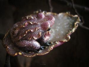 Новая брошь с лягушечкой уже в магазине!. Ярмарка Мастеров - ручная работа, handmade.