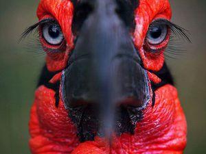 Вдохновляемся у природы: яркие птички. Ярмарка Мастеров - ручная работа, handmade.
