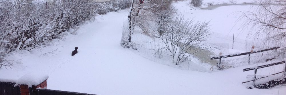 снег, весна