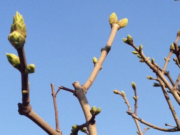 Первое незримое присутствие Весны...   Ярмарка Мастеров - ручная работа, handmade