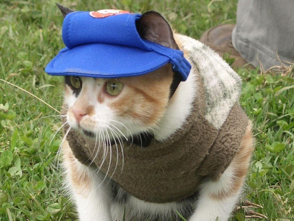 так коты в кепках картинки хороши