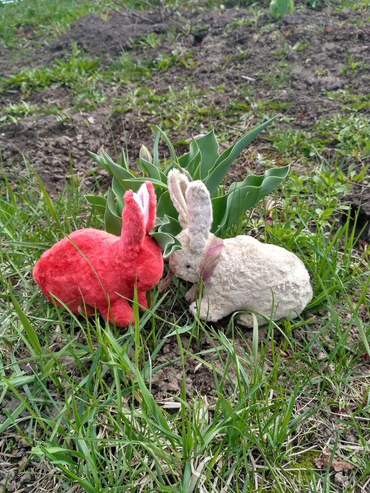 зайца кому