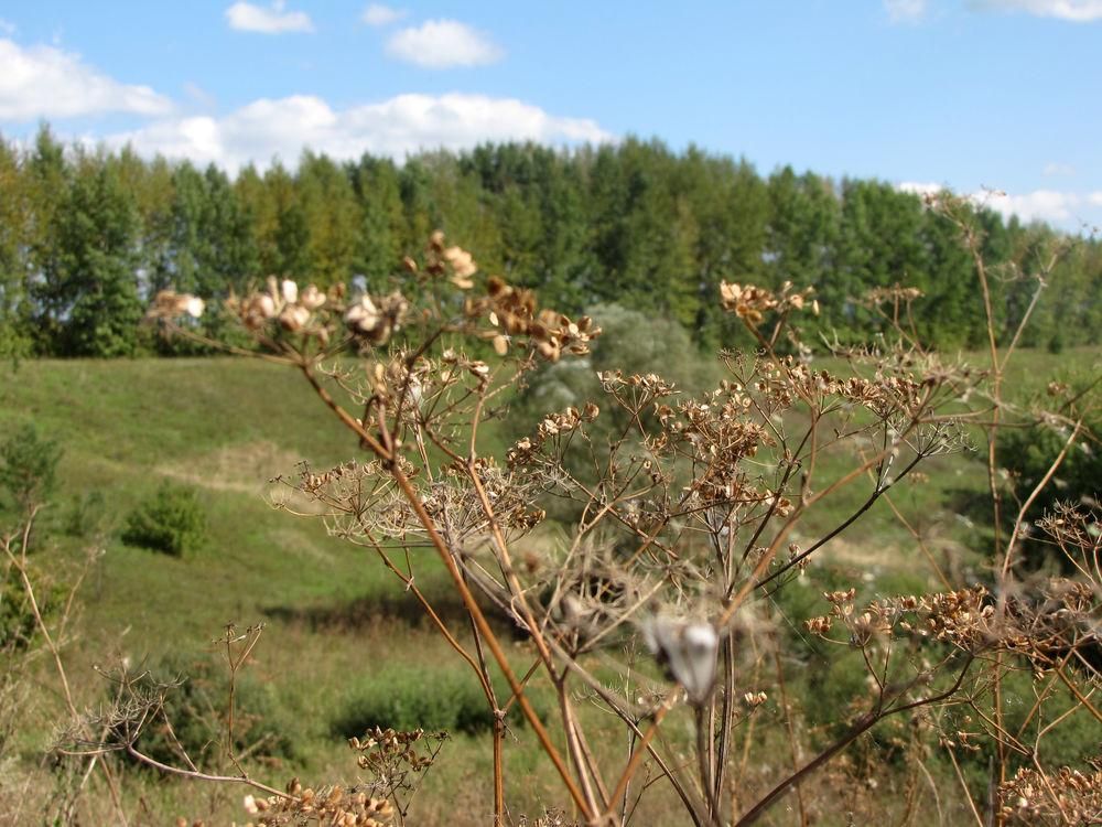 ясная осень