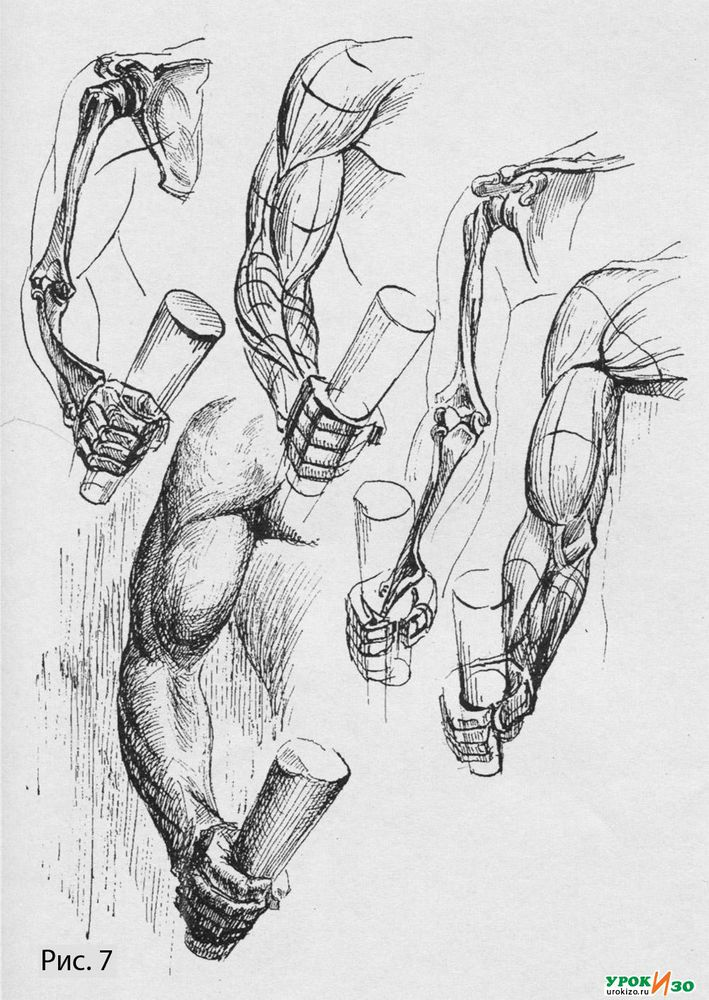 Анатомические рисунки от руки