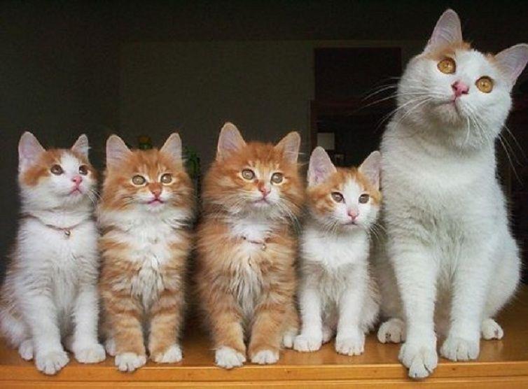 история, история из жизни, про котов, реальная история, позитив