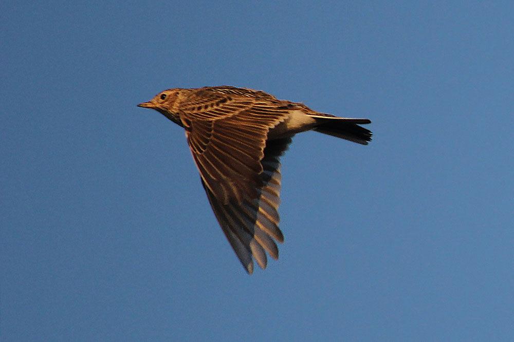 члены птицы калининградской области фото с названиями лучше всего