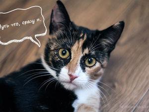 Сказ первый: О любопытном мальчонке и озорной кошке.. Ярмарка Мастеров - ручная работа, handmade.